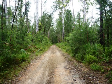 Nitchaga Creek Road. Photo: Barry Schmith, Queensland Government