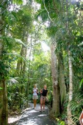 Jumrum Creek walk. Photo: Tourism Kuranda.