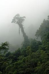 Mist-shrouded rainforest on the Kennedy Highway, which passes through Kuranda National Park. Photo: Greg Watson.