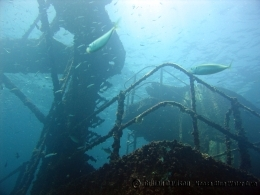 The former Royal Australian Navy warship is now a premier dive destination.