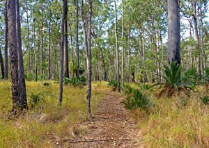Tall eucalypts and giant cycads are a feature of the Consuelo camping zone