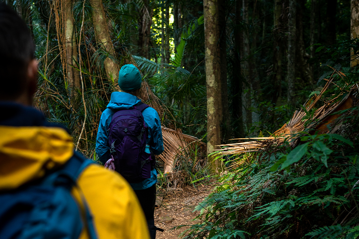 Two hikers in bright cold weather gear are walking on a rainforest track.