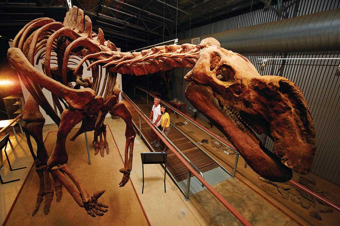 Visitors gaze at enormous dinosaur skeleton of 7m Muttaburrasaurus in shed-like museum.