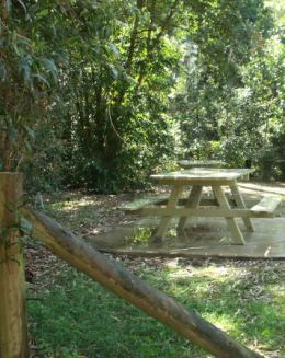 Scrubby Creek day-use area has picnic tables with an extended top suitable for seating a person in a wheelchair.  Photo: Queensland Government Garry King.