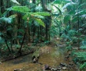 Subtropical rainforest is just one of the vegetation types found in D'Aguilar National Park. Photo courtesy of the Queensland Museum.