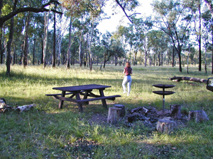 The shade of tall eucalypts covers campers at Lonesome section, Expedition National Park.