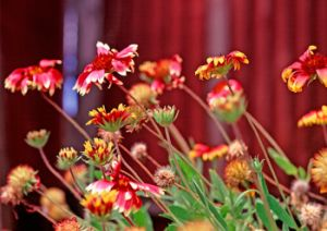 Flowers still survive in a garden bed adjacent to the dining hall of the island's lazaret.