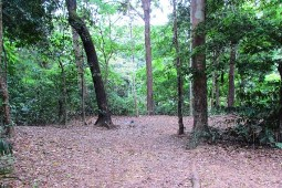 Site two, Rainforest camping area.