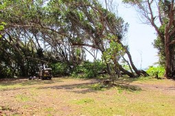 Sites 21 and 22 at Chilli Beach camping area. Photo: Gary Featonby, Queensland Government.