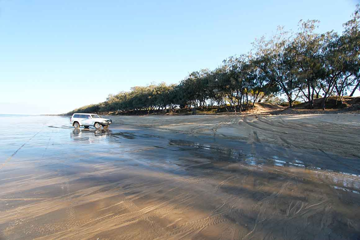 Four-wheel-drive vehicle drives over wet sand on beach towards a beach access track through a line of casuarinas at the back of the beach.