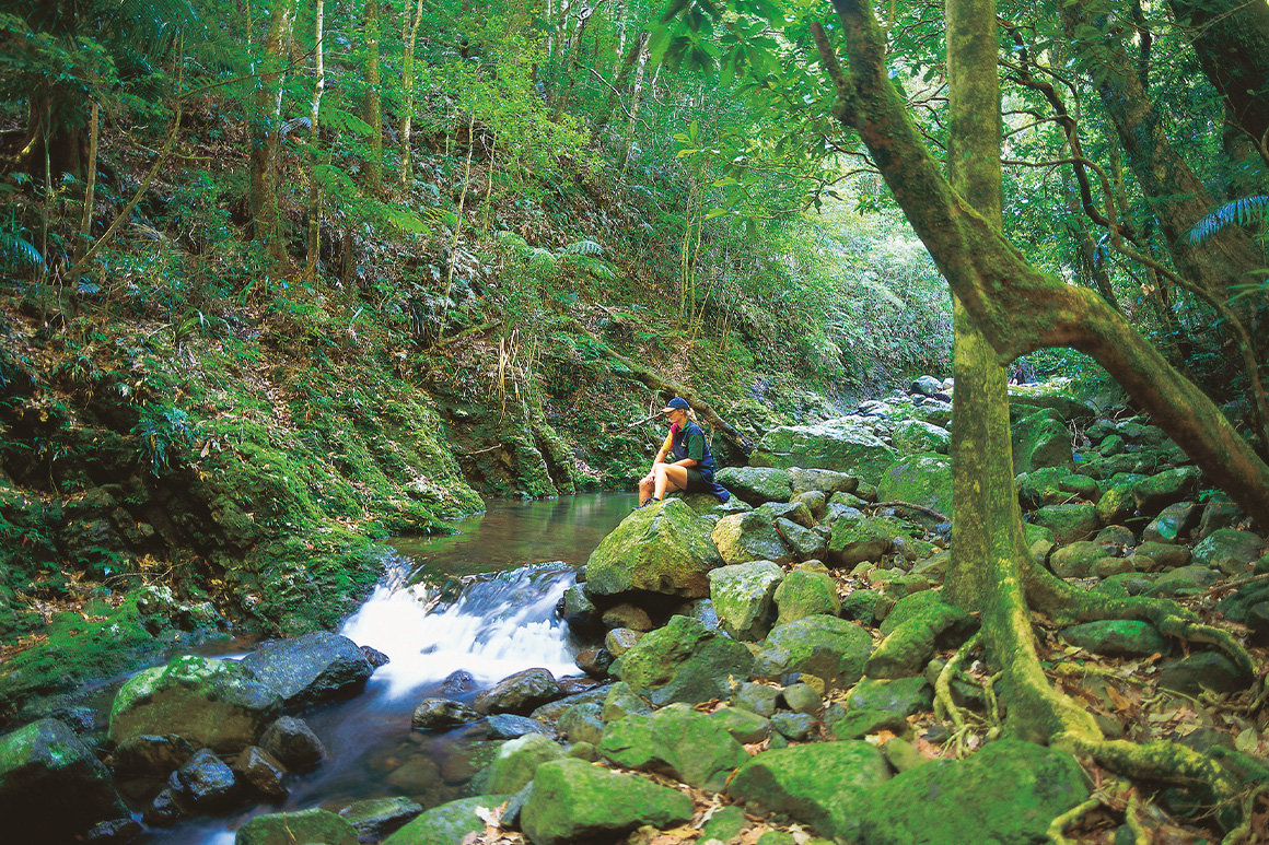 A person sits on a rock as water cascades down a rocky creek surrounded by lush rainforest.