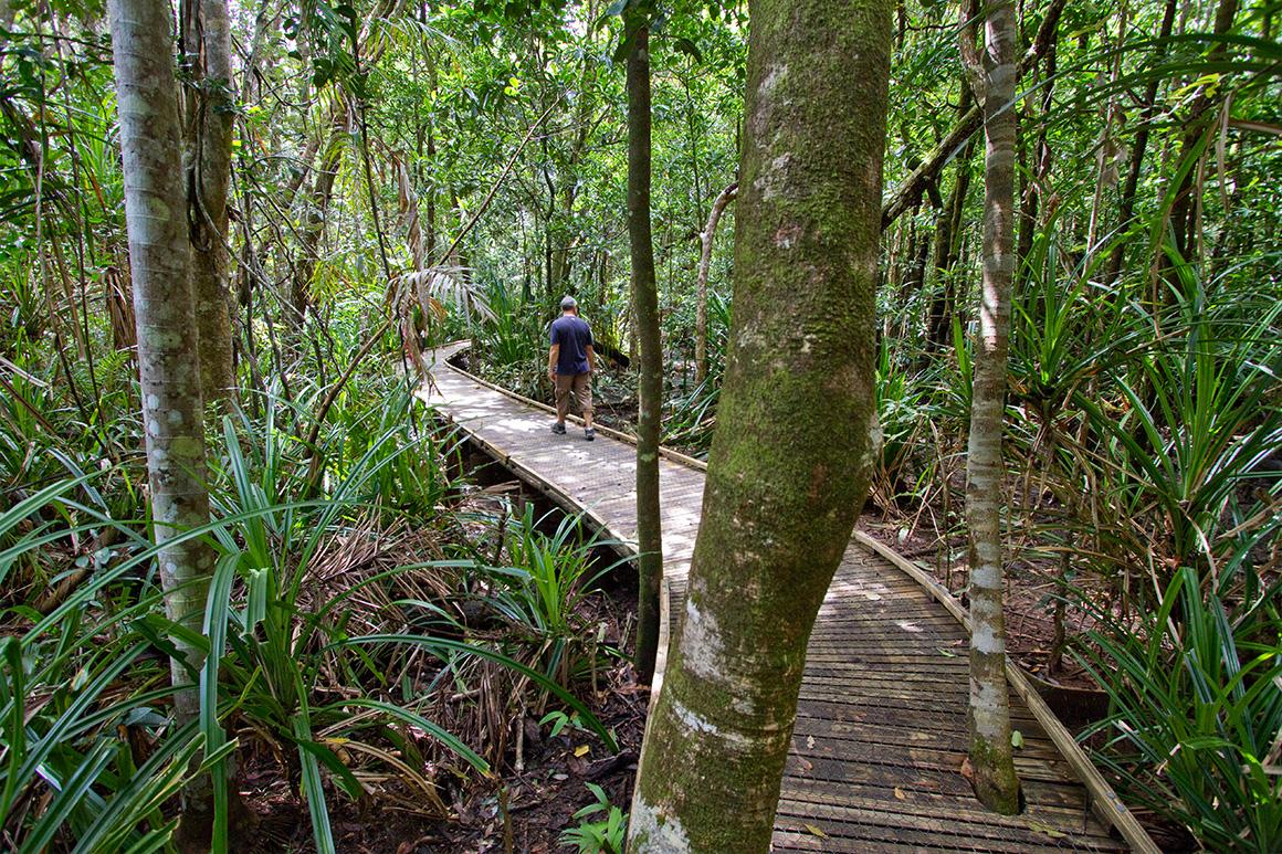 Alt text< a visitor walks along a low level board though pandanus wetland.
