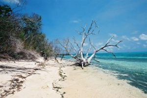 Tropical beach on Green Island. Photo: Queensland Government.