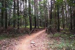 Mountain-bike trail from McGregor Road entrance. Photo: ©Queensland Government