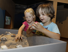 Search for eggs and hatchlings in this Turtle Tales immersive activity. Photo: Queensland Government.