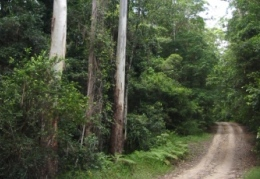 Rainforest features on the forest road from the day-use area.