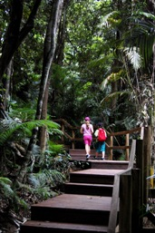 Boardwalks along the Djina-Wu walk allows easy walking for all ages. Photo: Julie Swartz, Queensland Government