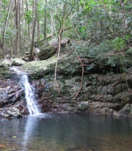 Rock pools can be found in many of the creeks in Bulburin National Park. Photo: Mike Taylor, Queensland Government.