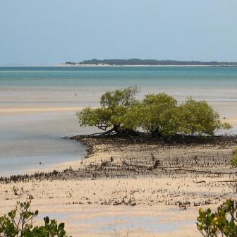 Sandy Point across Corio Bay. Photo: Matt Kayes, Queensland Government.