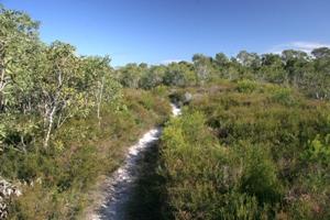 Heath circuit track, Currimundi Lake (Kathleen McArthur) Conservation Park.