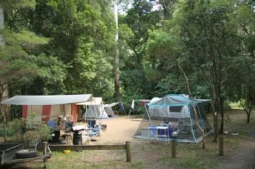 Image of Booloumba Creek 1 camping area, Conondale National Park. Photo: Ross Naumann, QPWS volunteer.