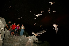 Female bats leave their roost at dusk to feed.