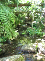 The trail crosses several small creeks. Photo: Queensland Government.
