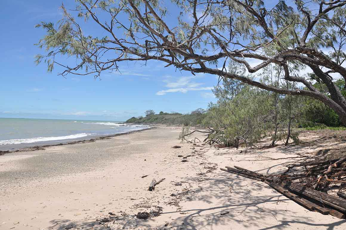 View through casuarina branches along sandy beach lapped by gentle waves towards a small rocky point