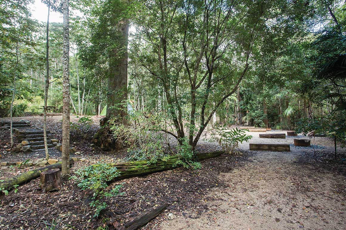 Rainforest trees surround an open space with fire rings and logs depicting the camp sites