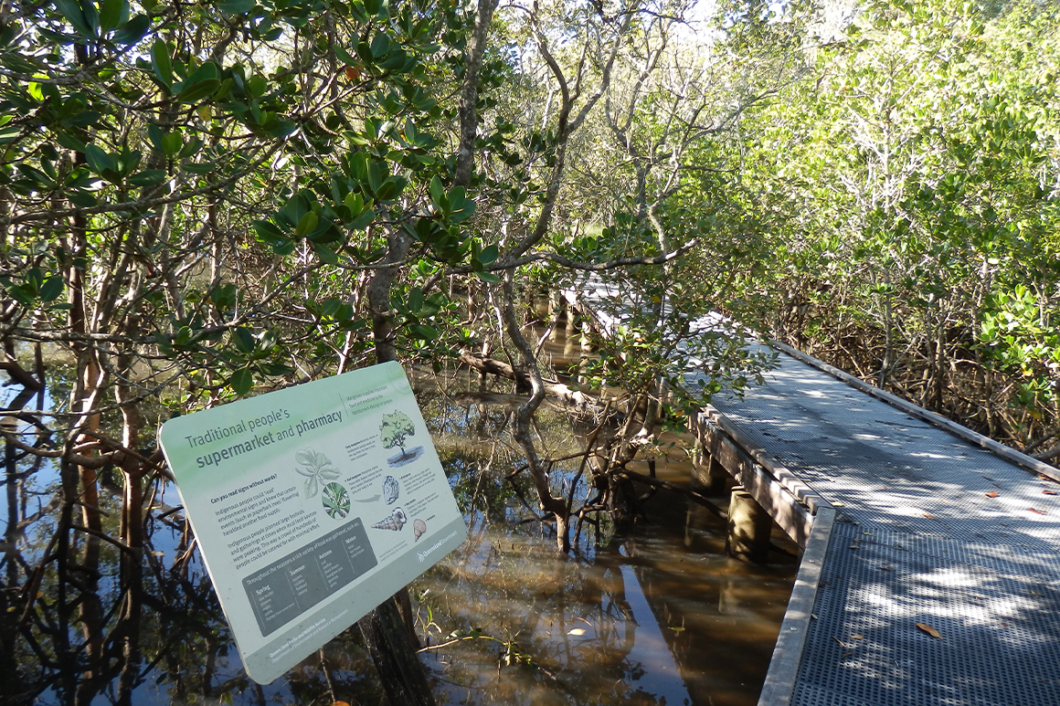 A metal boardwalk is suspended over a muddy mangrove environment with leafy mangrove trees all around and an interpretive sign framing the walk on the left.