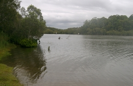 Pimpama declared Fish Habitat Area