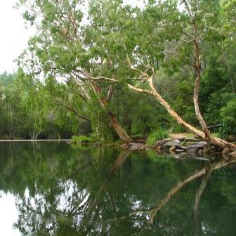 Stony Creek at Upper Stony. Photo: Matt Kayes, Queensland Government.