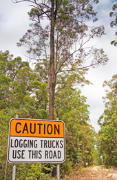 Logging trucks use access roads. Drive with care. Photo: K. Smith, Qld Govt.