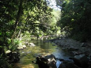 One of the many creek crossings along the Home Rule track. Photo: Queensland Government.