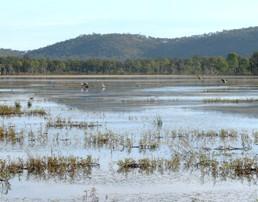 Birdwatch at Emu Swamp dam. Photo: Eleanor Collins, Queensland Government.