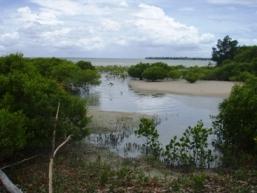 Mangroves line the creek.
