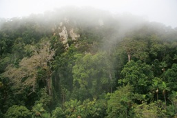 The park features lush, often mist-shrouded, tropical rainforest.