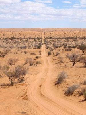 Image of vehicle track over rolling sand dunes in Munga-Thirri National Park.