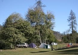 Glastonbury camping area. Patches of riverine rainforest fringe Glastonbury Creek. Photo: Ross Naumann, QPWS volunteer.