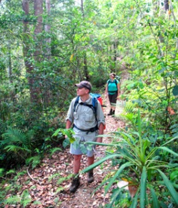 The Great Walk track passes through a range of vegetation types as it skirts the headwaters of three major waterways.