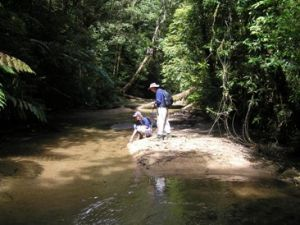 Image of Rainforest creek, Gorrell track.