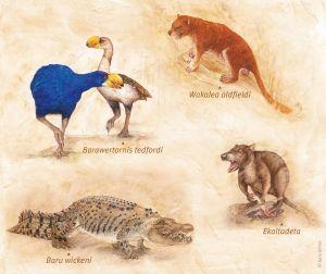 Illustrations of mega-fauna