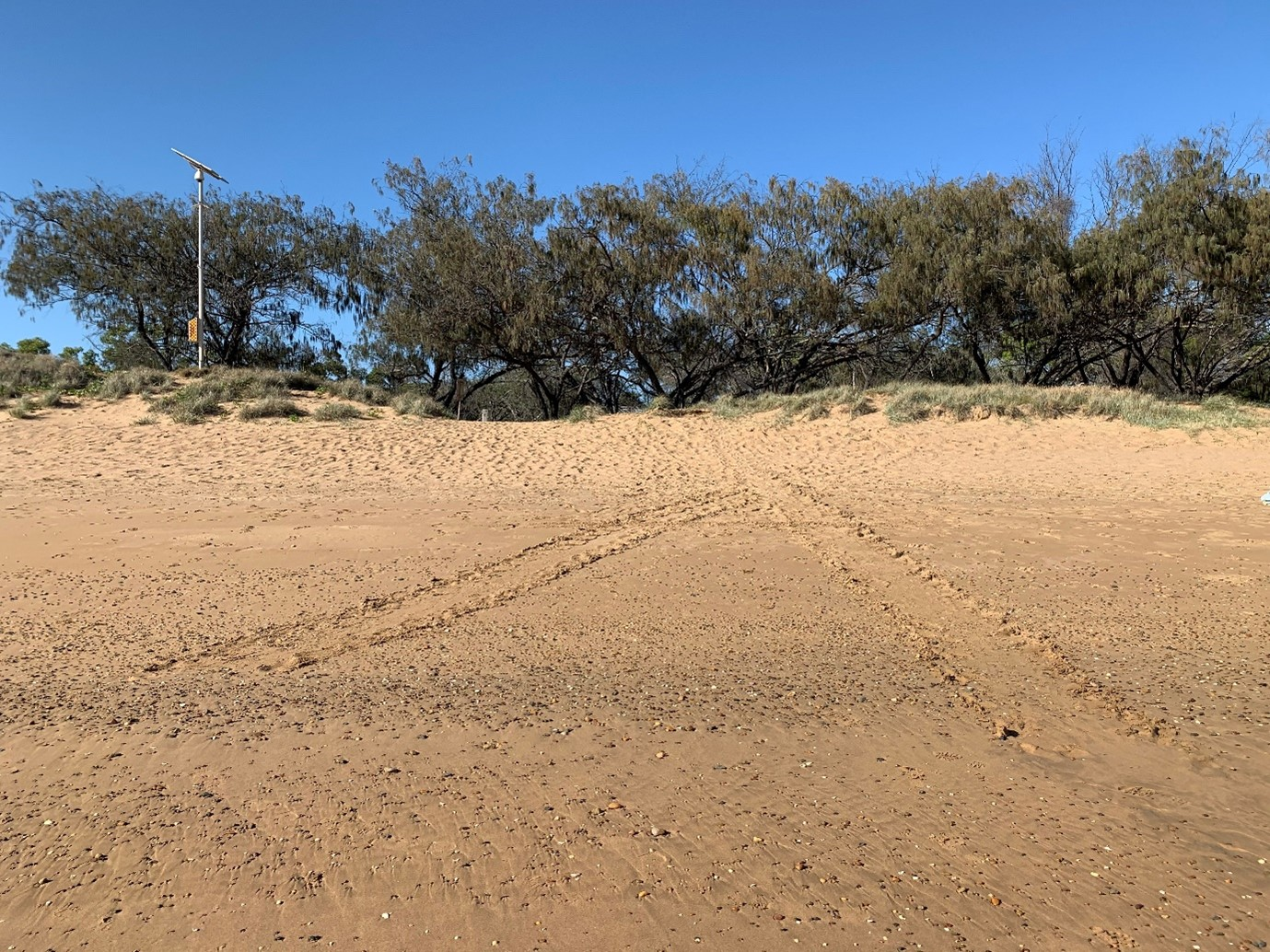Image of Loggerhead turtle tracks which stretcj across Mon Repos beach