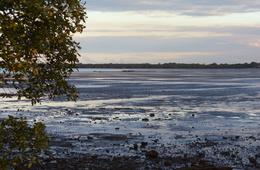 Mud flats of the Deception Bay declared Fish Habitat Area