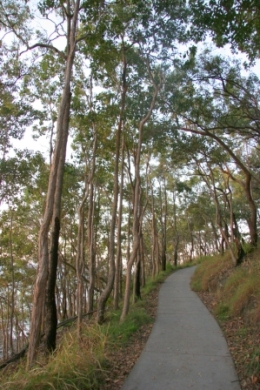 The Coastal Walk to Dolphin Point is a sealed, barrier free path. This image shows an uphill section of the walk close to Dolphin Point. Photo: Ross Naumann, QPWS volunteer.