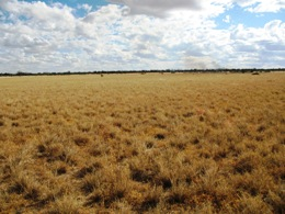Moorrinya's grassland plains. Photo: Tony Salisbury, Queensland Government