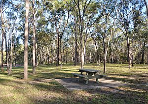 Wongi State Forest day-use area. Photo: Brian Tighe, Queensland Government.