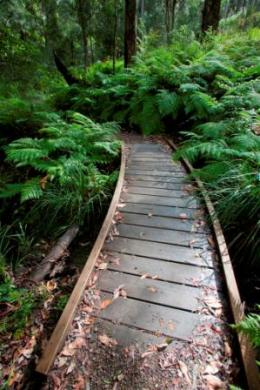 Booloumba Falls walking track. Photo: Robert Ashdown, Queensland Government.