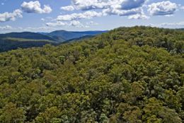The wild ranges of the Conondales have a turbulent geological past. Photo: Adam Creed, Queensland Government.