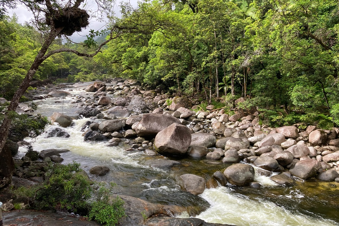 A river gushes through boulders surrounded by rainforest.